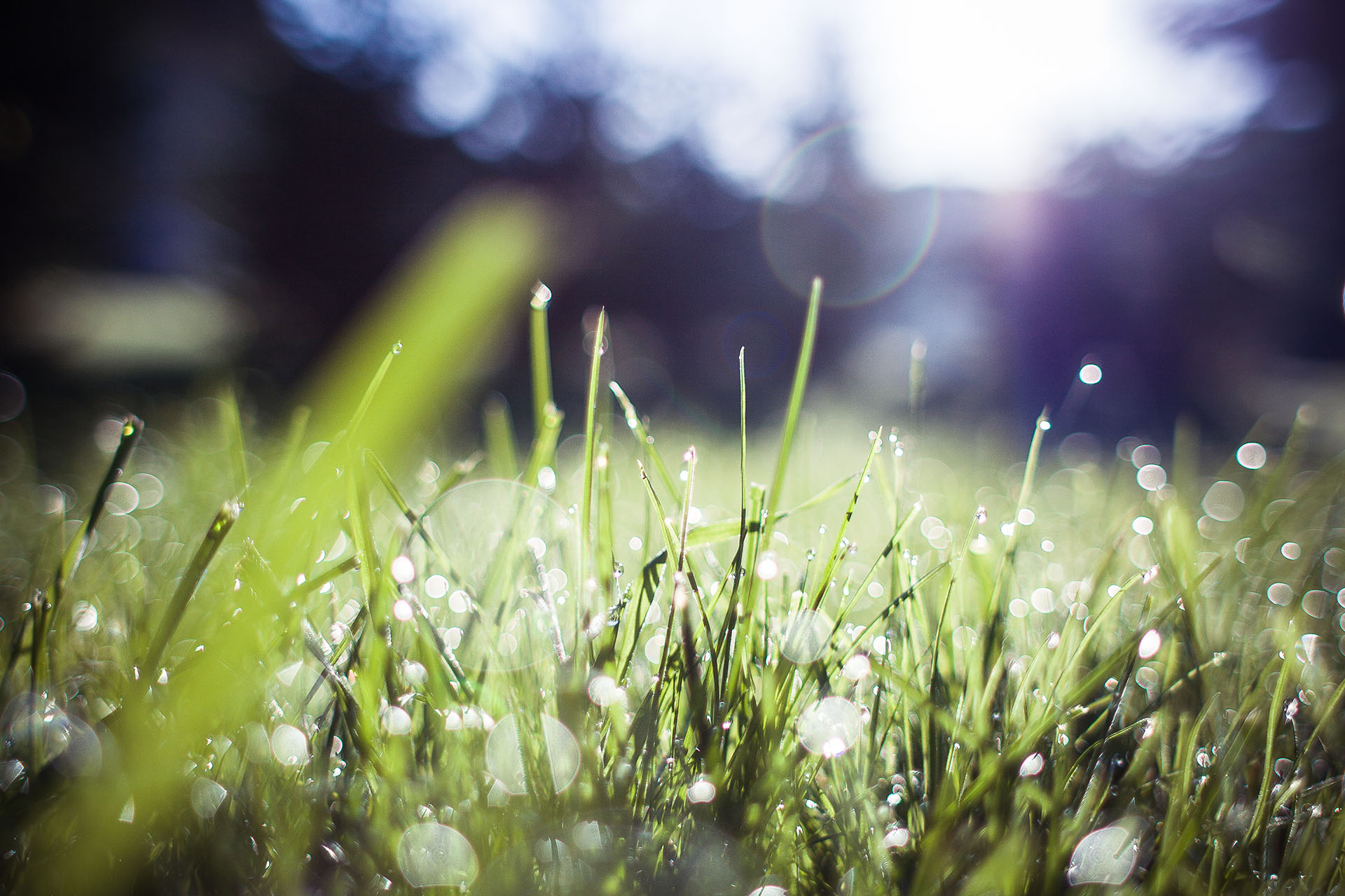 Grass - background image
